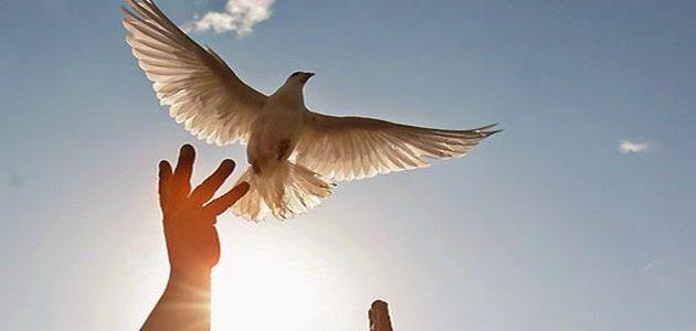حرية الاعتقاد في الكتاب المقدس والقرآن الكريم (2/1)