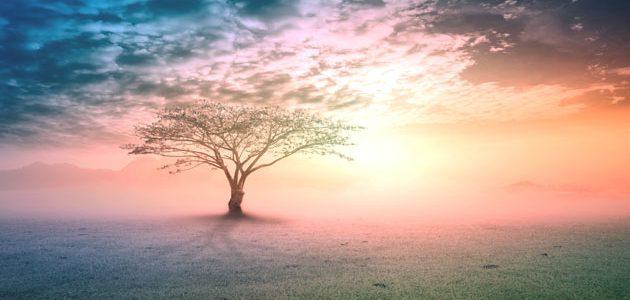أبرز الأنبياء بين المسيحية والإسلام: 1-النبي آدم عليه السلام
